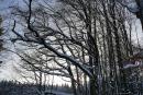 Feuerberg_Winter_2019-02-06-107