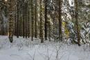 Feuerberg_Winter_2019-02-06-117