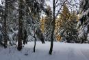 Feuerberg_Winter_2019-02-06-118