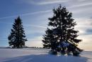 Feuerberg_Winter_2019-02-06-138