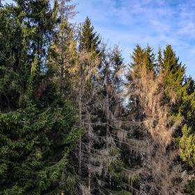 Feuerberg_April_2019-141