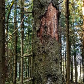 Feuerberg_April_2019-143